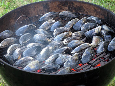 Fresh mussels grilling over hot coals
