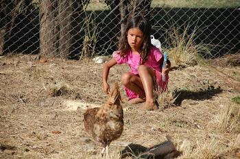 Sophia alimentando a las gallinas