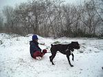 Baika en chien de traineau