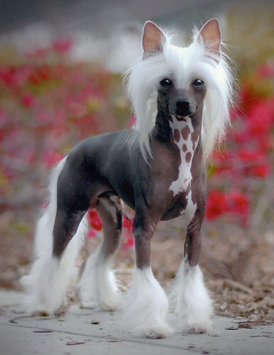 Dogs Picture Blog: Small Dog Breeds Pictures