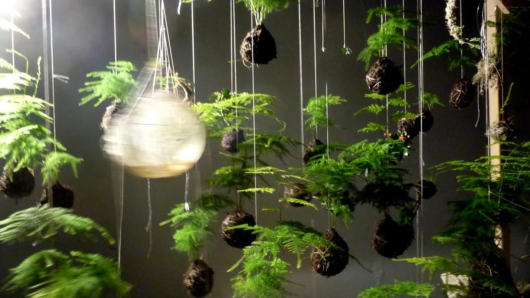 botany floral studio kokedama at botany. Black Bedroom Furniture Sets. Home Design Ideas