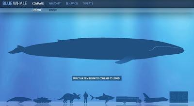 http://3.bp.blogspot.com/_jhhJghwNlgo/SgmiXyesFNI/AAAAAAAABUk/zfA6uifw29E/s400/blue+whale+facts.JPG