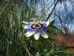 Floristeria,clika e veja que lindas flores