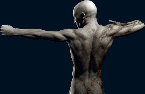 Rigging Asylum Human Anatomy Reference