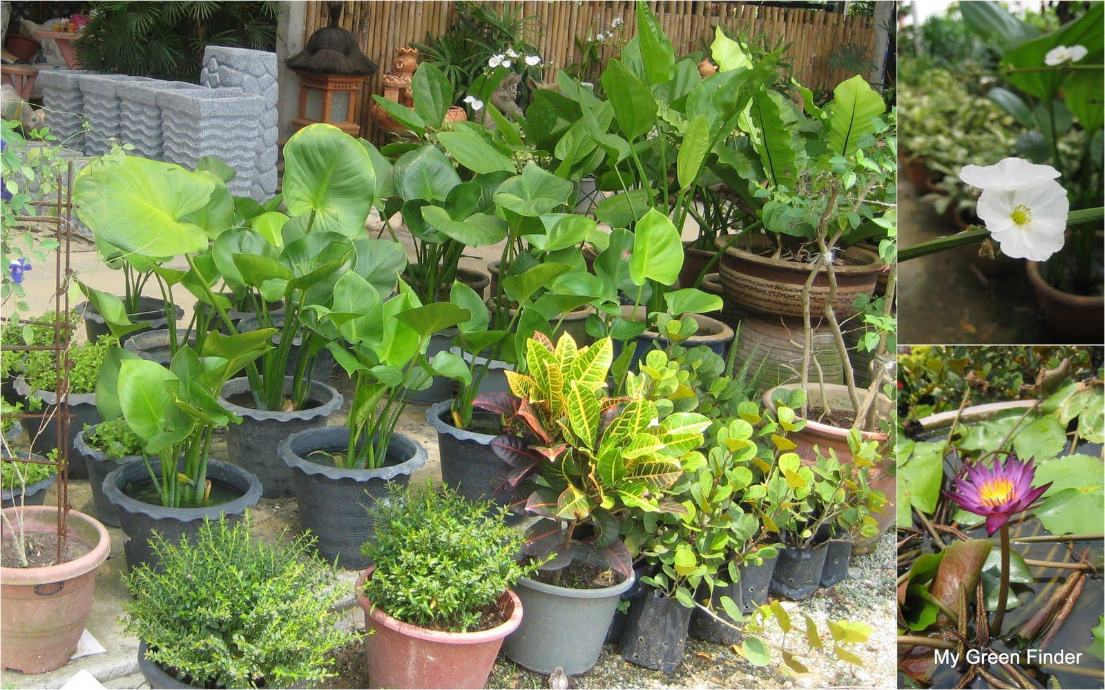My Green Finder Plant Vendors Katsura Garden Water Feature Garden Mart