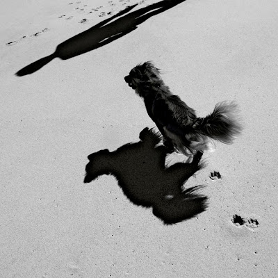 ombre, chien, maître, homme, dog and master, plage, photo © dominique houcmant
