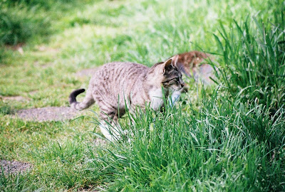 Little Tabby kitten explores the world