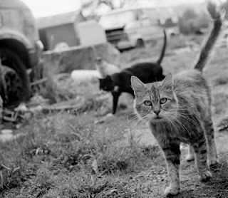 feral cats are part of nature, they are wild animals today