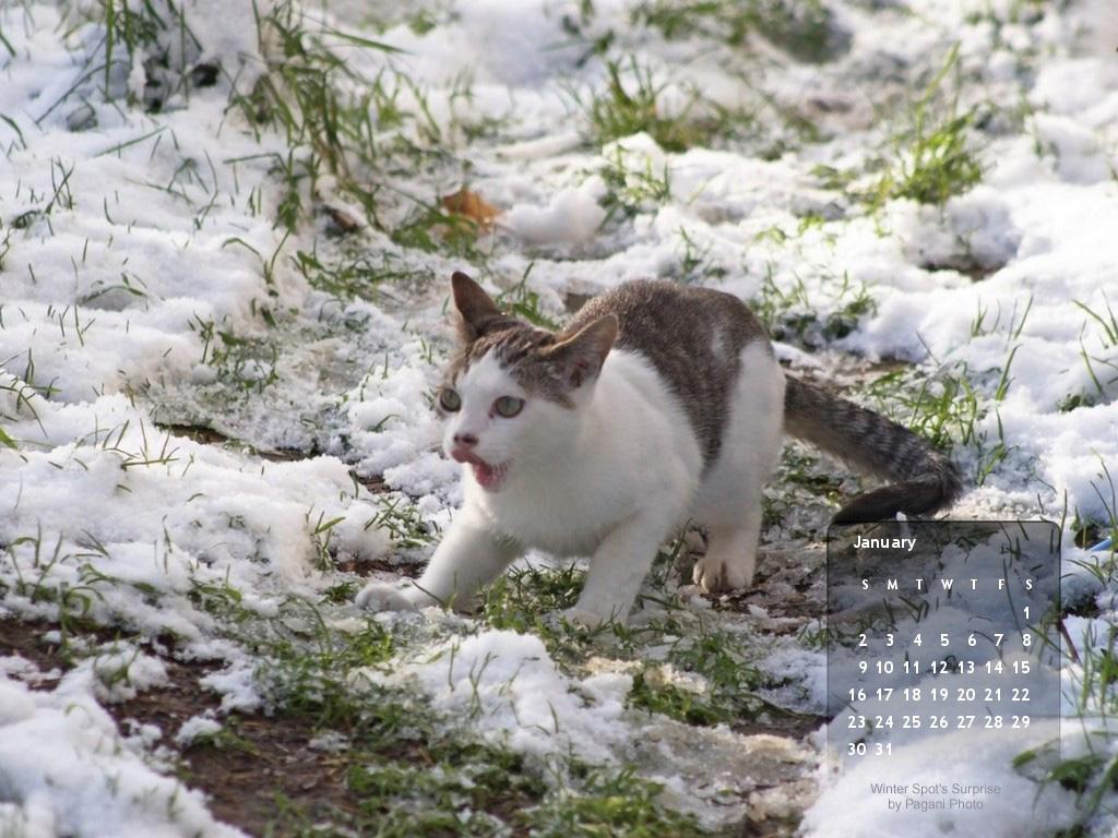 http://3.bp.blogspot.com/_jn8AXRuZo1U/TRzb2otpmGI/AAAAAAAACWo/sAUd7yBXnWs/s1600/January-desktop-cat-std+copy.jpg