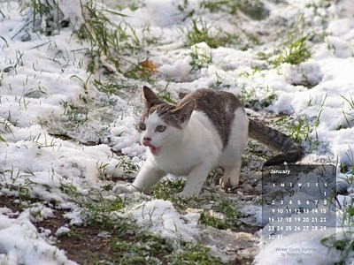 free January 2011 desktop CAT wallpaper calendar,  - Click on image to view full size, then RIGHT CLICK to save as desktop wallpaper