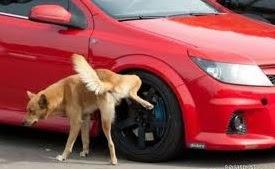 Por que los Perros Mean en las Ruedas?
