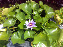 BALI WATER PLANT