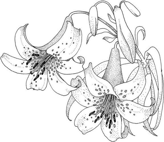 Dibujos de pintura en tela flores  Imagui