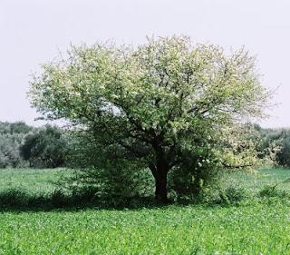 Τα δέντρα μεγαλώνουν πια πιο γρήγορα λόγω της κλιματικής αλλαγής 1+ΑθηνάπΚ