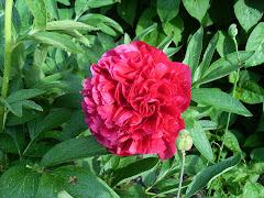 Underbara blomma!