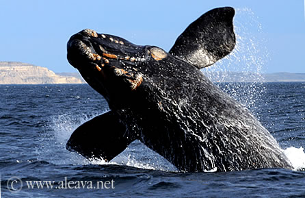 Whale watching, a great show for every photographer and nature's lover