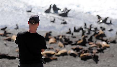 Orca Season in Punta Norte Valdes Peninsula Argentine Patagonia
