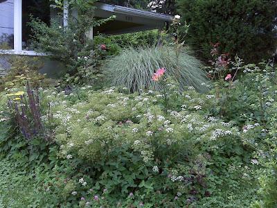 Greenish Thumb: John\'s garden