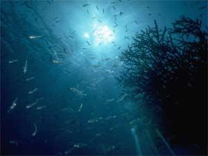 Oceano profundo