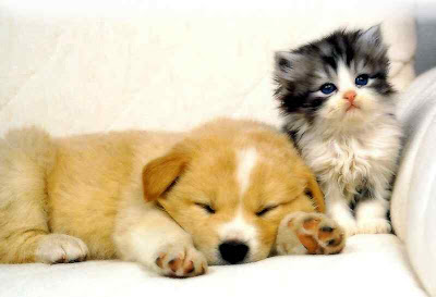 puppy kitten photo