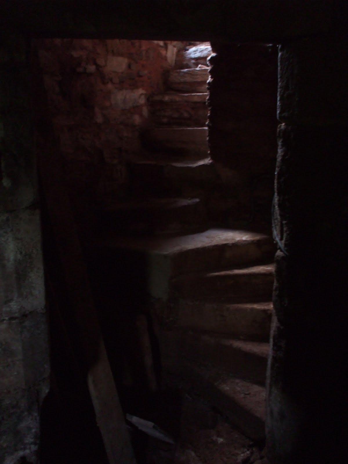 In Search Of The Kiwi Dank Dark Cellar