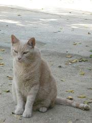 El Gato Canela