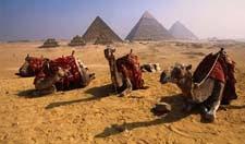 Onta dan Piramid