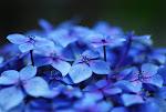 A vida nasce em forma de flor... Passarinho assovia, o céu te olha... e nada mais é tão AMOR...