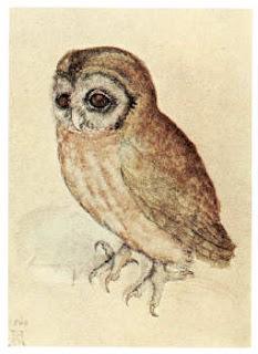 Albrecht Duerer's Small Owl