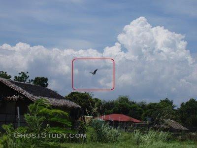 Penampakan burung raksasa lain di Filipina. Coba lihat