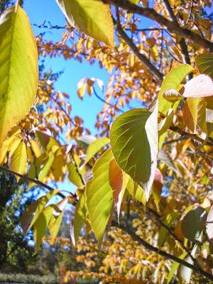 Frutales en otoño, Jardín de la Isla