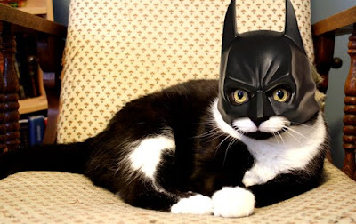 Black white tuxedo cat with cat-sized Batman mask, including pointy ears