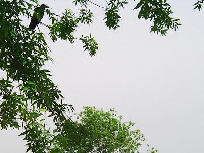 兵庫県伊丹市・昆陽池のからす