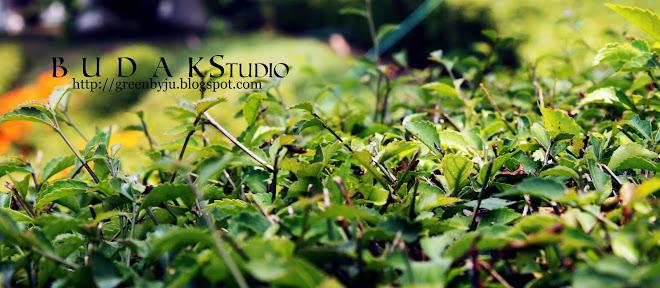 ~>>::`Budak Studio`::<<~