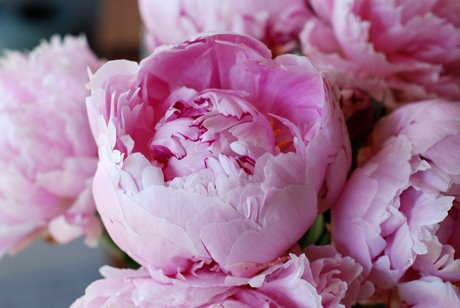 I Picked Up Some Of My Favorite Flowers This Weekend Who Would Thought That Costco Carry Such Beautiful Peonies Photos By Me