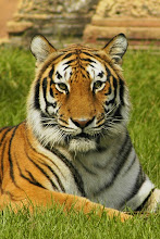 "Trenkapins, dit ""lo Tigre"" des d'una visita a Cienfuegos, l'Agost del 2002..."