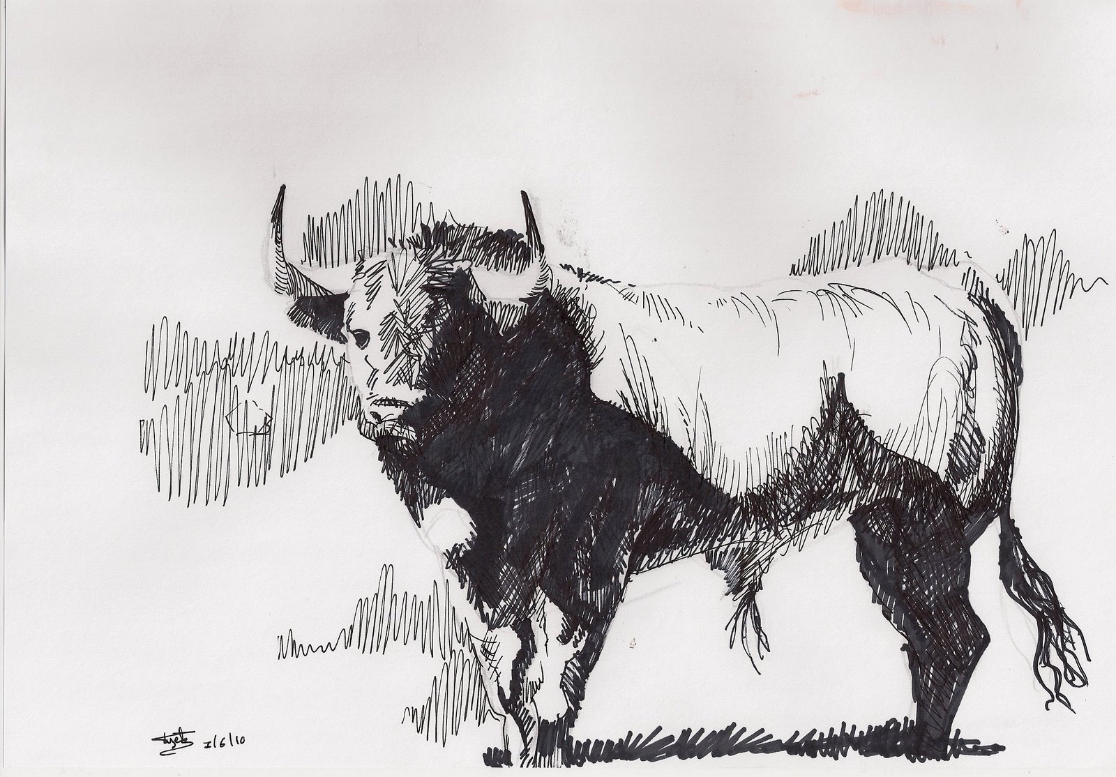 Dibujos Toros Bravos Imagui