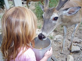 maia feeding deer