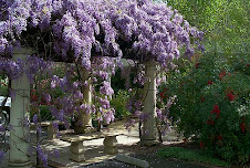 Pergola con Wisteria