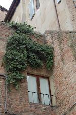 Alc.Iner. Puerta de Siena - Italia