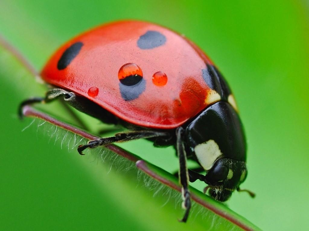 insectos com: