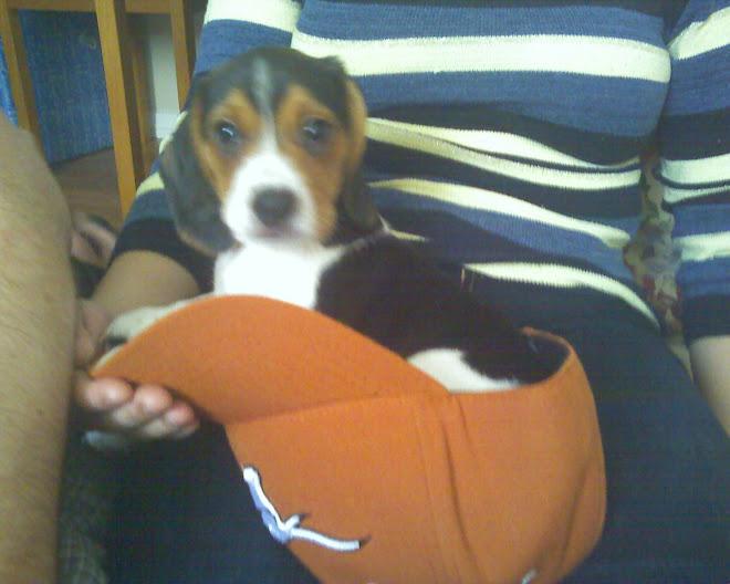 Belle's puppy