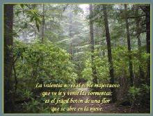 La valentìa no es el roble majestuoso, que ve ir y venir las tormentas;