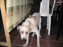 Firulais necesita urgente un hogar - Argentina