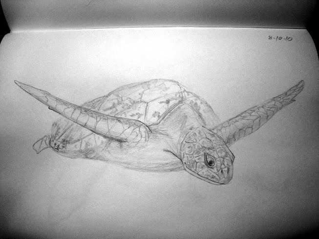 Sea Turtle Sketches http://sketchyflavors.blogspot.com/2010/08/sea-turtle-process.html
