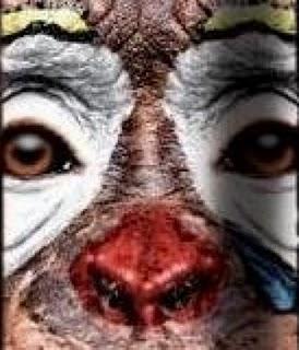 Circo com animais