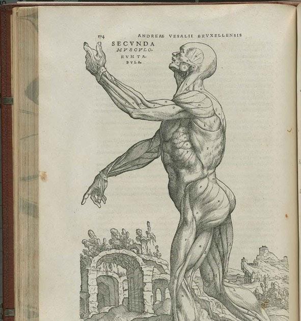 crónica de castas: Anatomía para \