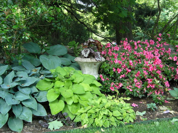 Welcome to gardening designs Shade garden