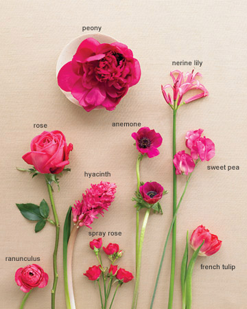 Flower Picture Color on Strong Pink That Pops And Compliments Any Color Scheme  These Are A