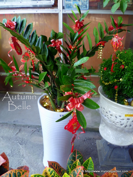Zamioculcas zamiifolia indoor plants that easy to care